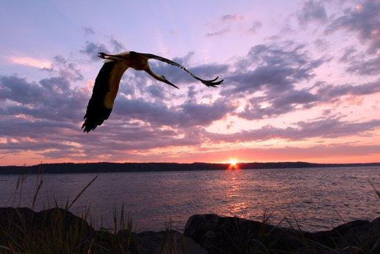 Мукилтео, Вашингтон: Mukilteo Sunset