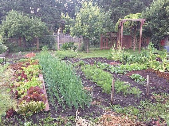 Eastsound, WA: Garden at Inn at Ships Bay