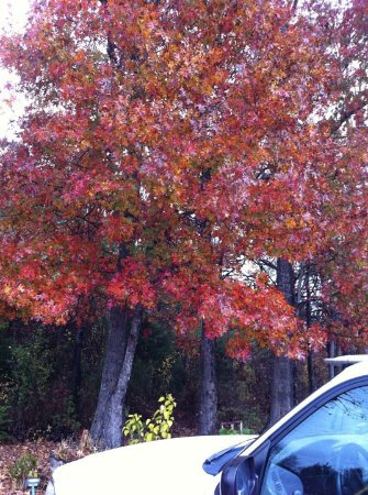 Bruce, MS: Splendor and color in the fall