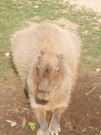 Lake Country, Canadá: Worlds largest rodent