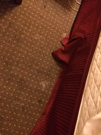 Plaza Hotel: Sticky stained carpet next to bed.