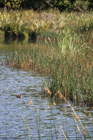 New Plymouth, Nueva Zelanda: Barrett Lagoon includes a large wetland.