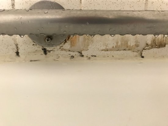 Travelodge Iowa City: Blood spots on the bathroom wall, mildew in the shower, flies in the room, and what looks like t