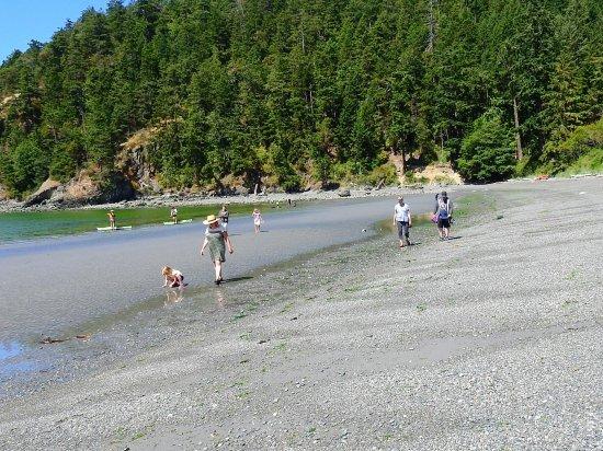 Oak Harbor, WA: Low tide walk on the beach