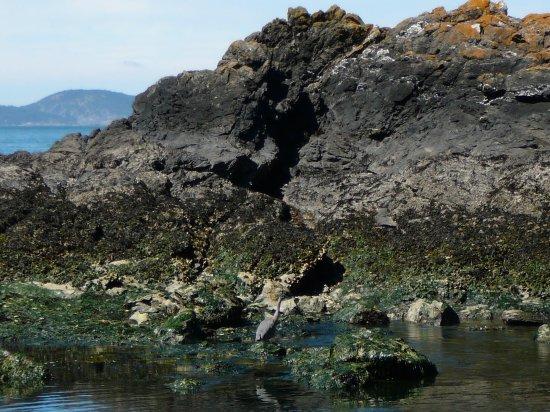 Oak Harbor, WA: Climbing on the rocks around the tidal pools at low tide
