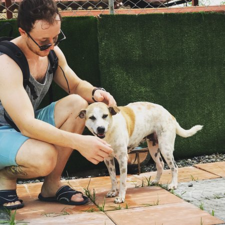 photo4.jpg - Picture of Soi Dog Foundation, Phuket ...