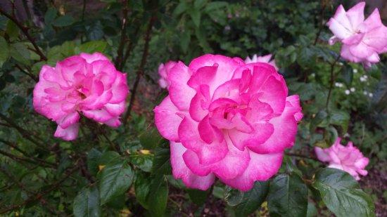 Atcham, UK: English Garden