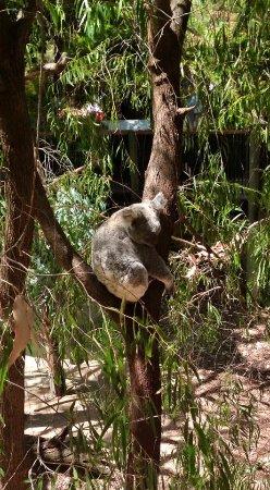 Bilde fra South Perth