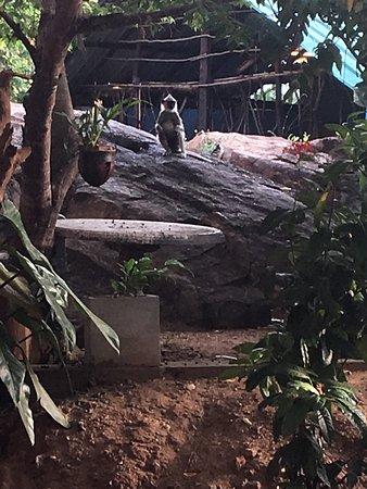 Sigiri Lion Lodge : photo0.jpg