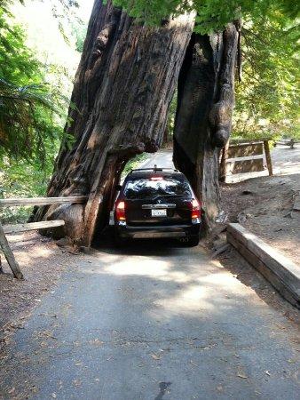 Weott, CA: photo2.jpg
