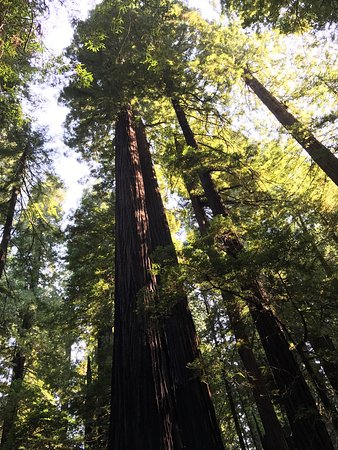 Humboldt Redwoods State Park Weott Ca Top Tips Before