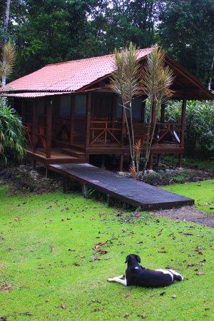 La Anita Rainforest Ranch: Typical cabin at La Anita