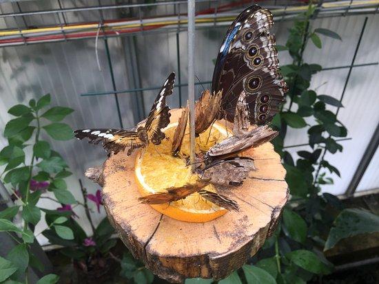 Jardin Des Papillons: photo3.jpg