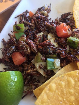 Edmonds, WA: Perfection in your mouth. Chapulines, I have been looking for you since I left Mexico & here you