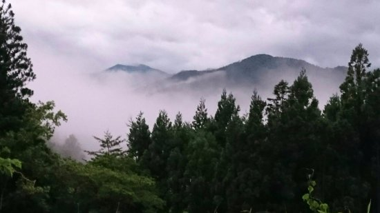 Rikuzentakata, Japan: 雲海に沈む森