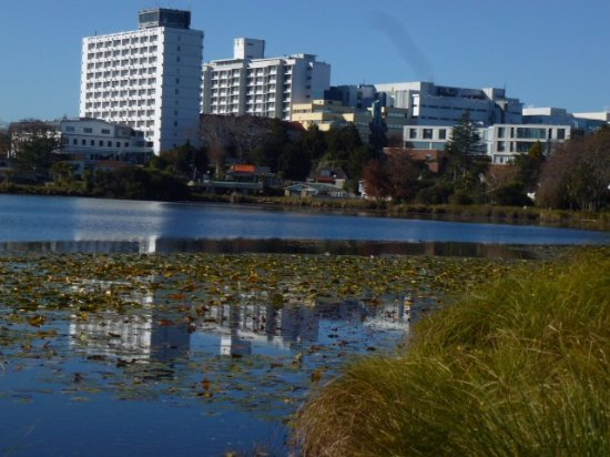 Hamilton, New Zealand: the hospital in the back ground and the water lillies on the lake