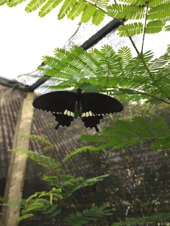 Siam Insect Zoo (Mae Rim, Thailand): Top Tips Before You Go - TripAdvisor