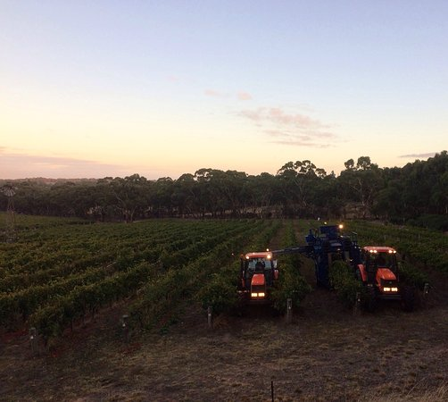 Clare Valley, Australia: Sussex Squire Wines produce premium small batch wines from single vineyard sites that show disti