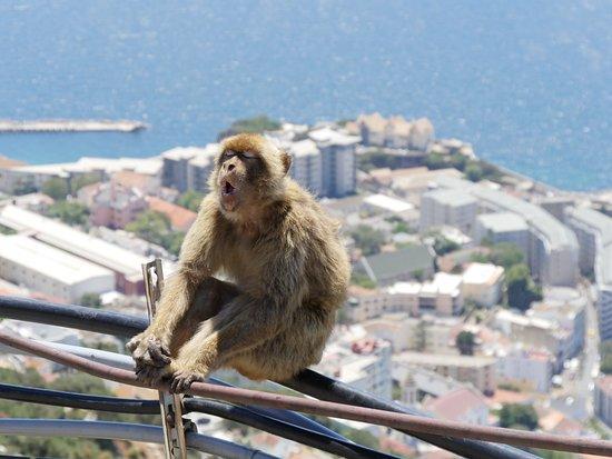 Gibraltar Taxi Association