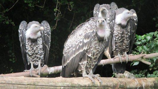 Alphen aan den Rijn, The Netherlands: De roofvogels