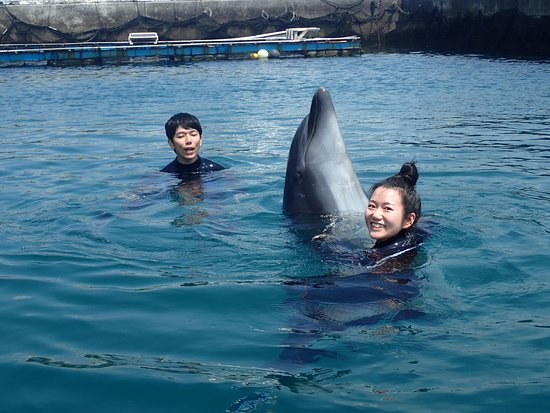 Muroto, Japonya: イルカとダンス dance with a dolphin