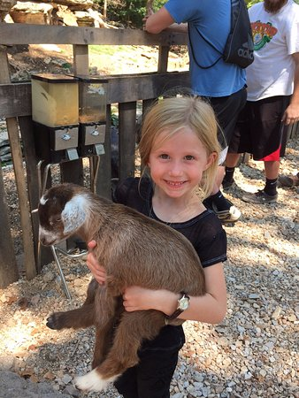 Lanagan, MO: Baby goats allowed out of pen for petting, handling, feeding