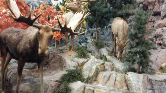 Triadelphia, Virginia Barat: Moose