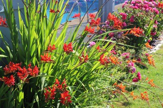 Manzanita, OR: Pretty flowers by the pool