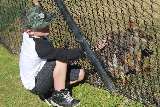 Nulkaba, أستراليا: Patting the animals