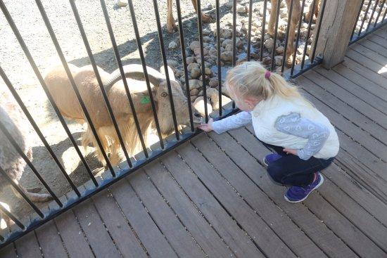 Nulkaba, أستراليا: Feeding the goat