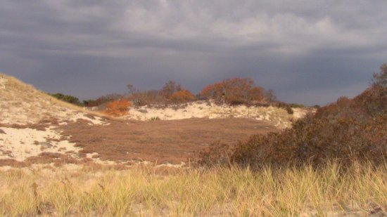 West Barnstable, MA: The dunes