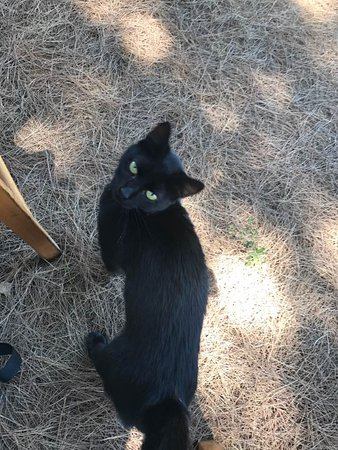 Mercouri Estate: One of the vineyard cats, Noe. He was quite the lover. :)