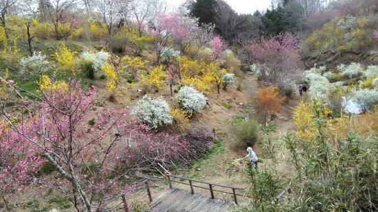 Motegi-machi, Japan: P_20170415_142245_large.jpg