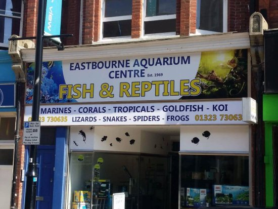 Eastbourne aquarium and reptile centre