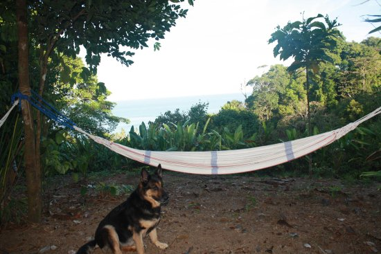 Guaria de Osa Ecolodge: Hammocks on the hill overlooking the ocean