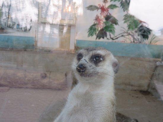 Rongcheng, China: Meerkats were housed inside a box-like enclosure