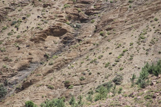 Marrakech-Tensift-El Haouz Region, Fas: Mountain view - can you find the sheep?/