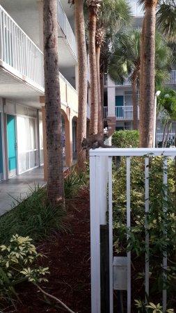 Quality Suites Lake Buena Vista: Las ardillas son tus vecinas en Orlando!