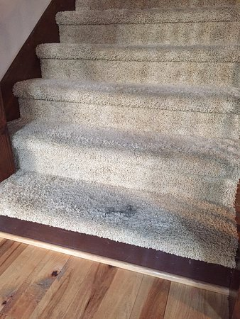 Cle Elum, WA: numerous carpet stains throughout the house