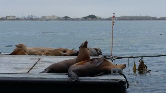 San Diego Seal Tours: This was a barge full of sea lions that we rode right up to. They're such beautiful creatures.