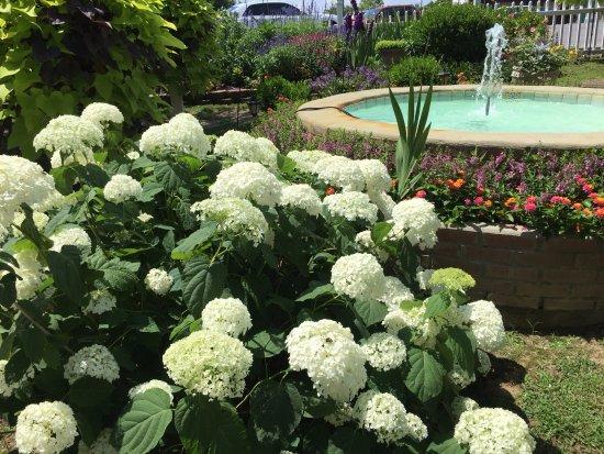 Mountain Aire Motor Inn: Gorgeous Garden