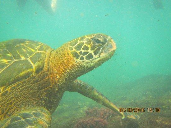 Puerto Villamil, เอกวาดอร์: sea turtle while snorkeling
