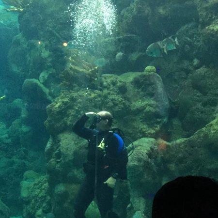 The Florida Aquarium : photo3.jpg