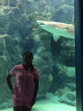 The Florida Aquarium : photo4.jpg