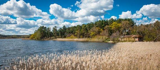 Frensham, UK: Frensham Little Pond, Surrey