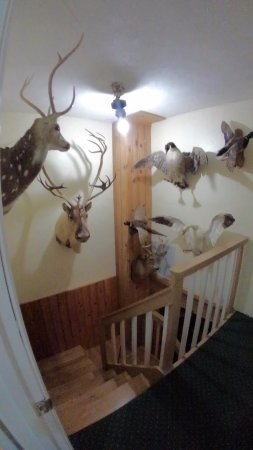 Lenoir City, TN: stairwell in the lodge