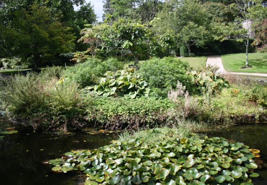 St Dominick, UK: Pond and gardens
