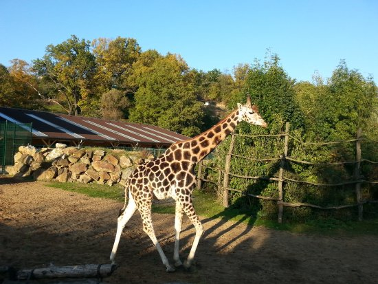 Zoo Plzeň: žirafa