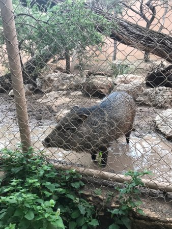 Living Desert Zoo And Gardens State Park Carlsbad Nm Top Tips Before You Go With Photos