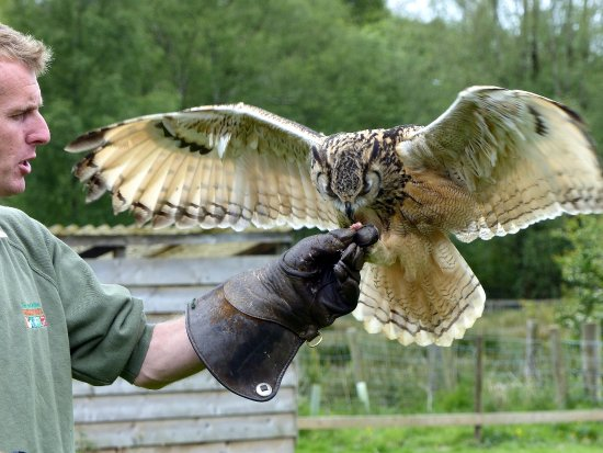 The Lake District Wildlife Park Photo